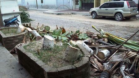 Repondrán árboles derribados en otra zona