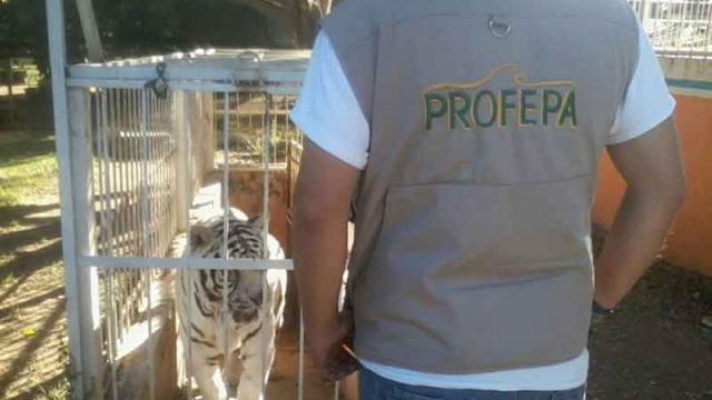 Asegura Profepa 18 ejemplares  de vida silvestre en Jalisco