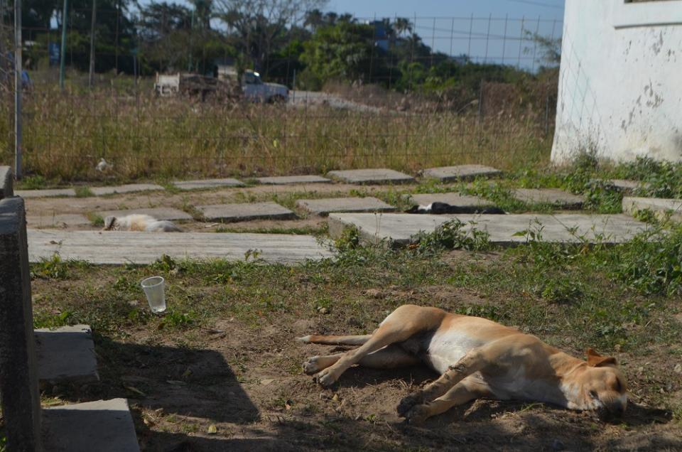 Envenenan animales  en Campo Verde