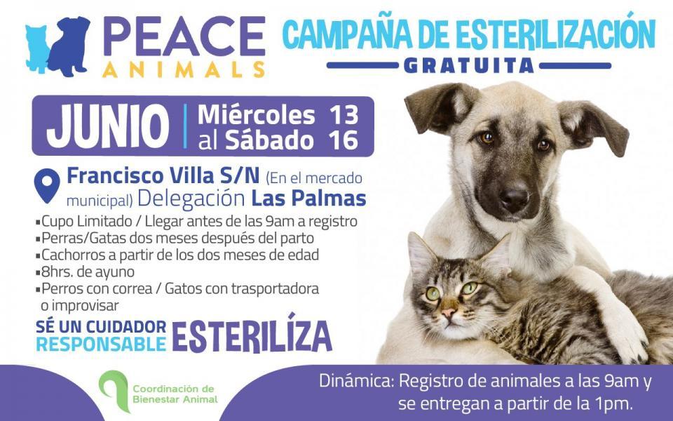 Invitan a la población para esterilizar a sus mascotas