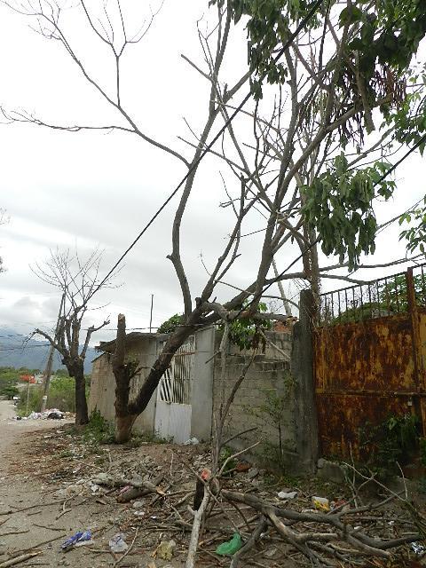 Sin luz por la caída de árboles  sobre cables de energía eléctrica
