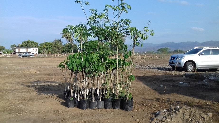 Bahía ofrece árboles para reforestar