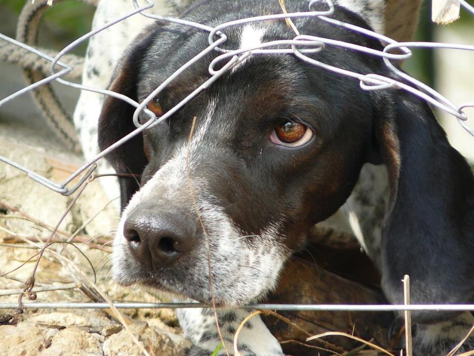 Falta de apoyo a los animales en Bahía de Banderas