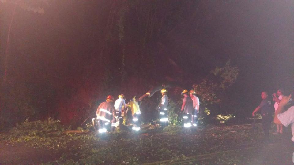 Cae árbol cae sobre Libramiento y provoca fuerte accidente