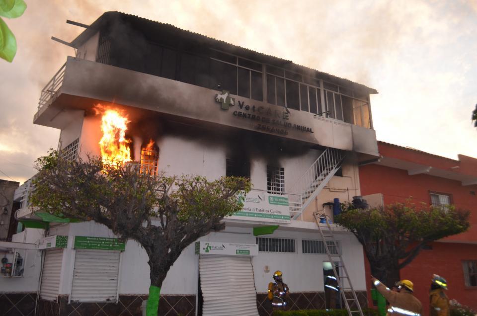 Explosión en veterinaria, deja  tres perros y un Tucán muertos