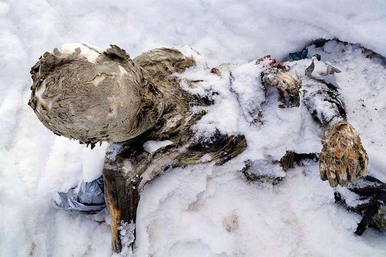Recuperan tres cuerpos momificados del Pico de Orizaba