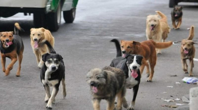 Los perros en las calles representan un problema de salud pública