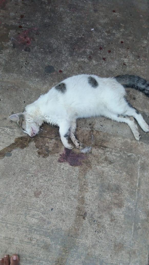 Siguen los envenenamientos  de mascotas en Bahía