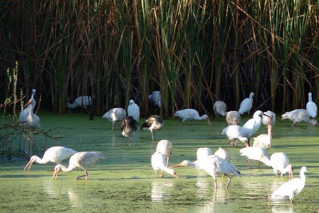 Iniciarán programas de educación  ambiental en Bahía de Banderas