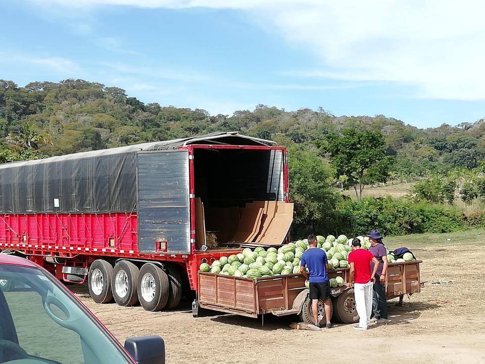 """La actividad agrícola en Bahía de  Banderas sigue siendo un """"volado"""""""