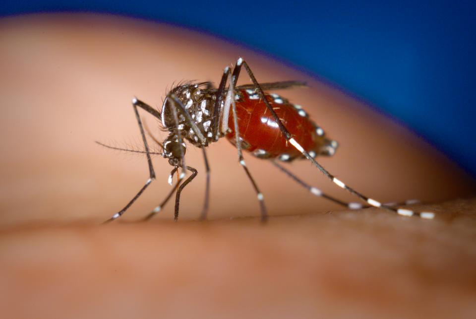 Registra la Octava Región Sanitaria  66 casos probables de dengue