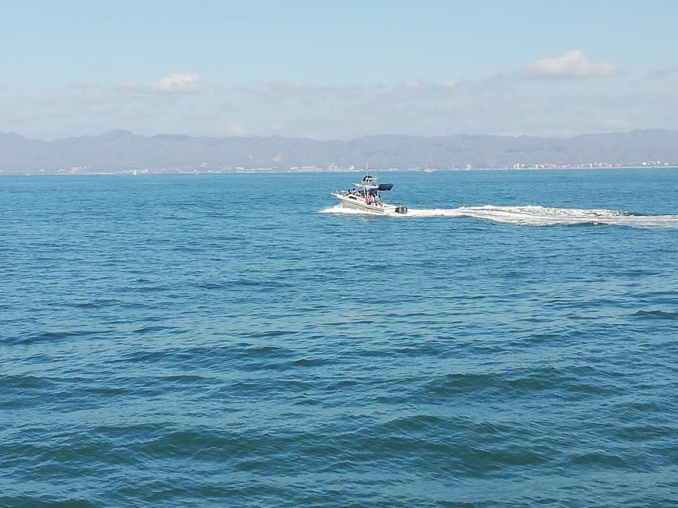 Irregularidades en el  avistamiento de ballenas
