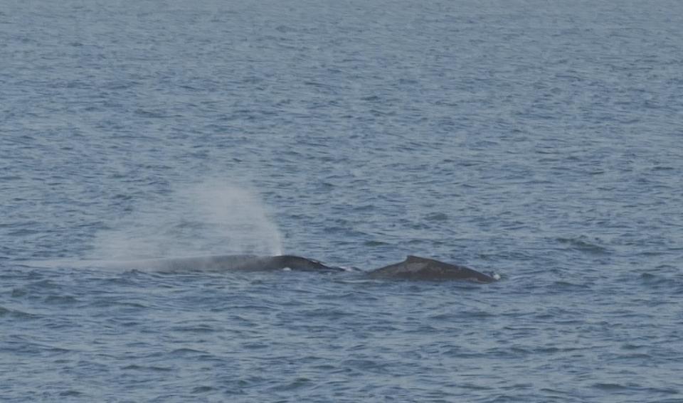 El avistamiento de ballenas, el paseo  que todo turista y local debe de hacer