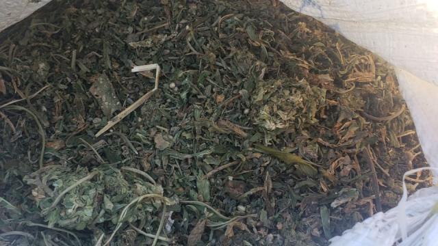 Asegura Fiscalía General de la República 106 kilos de marihuana