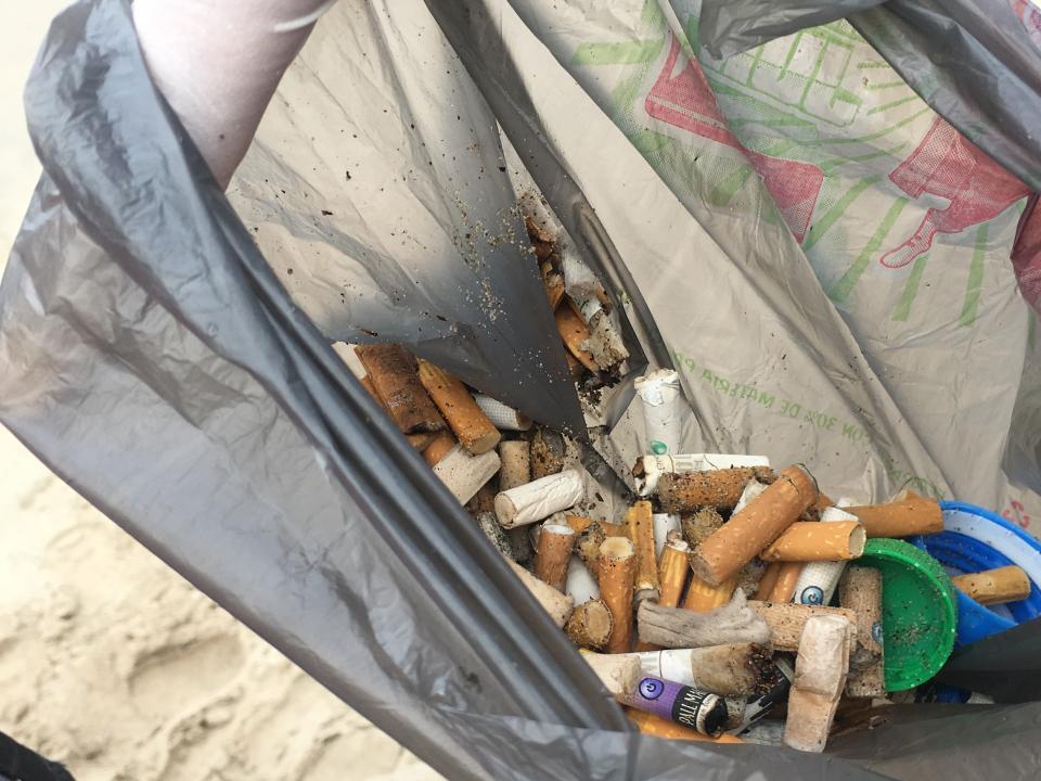 En la plaza de playa de Olas Altas Colectan ambientalistas miles de colillas de cigarros