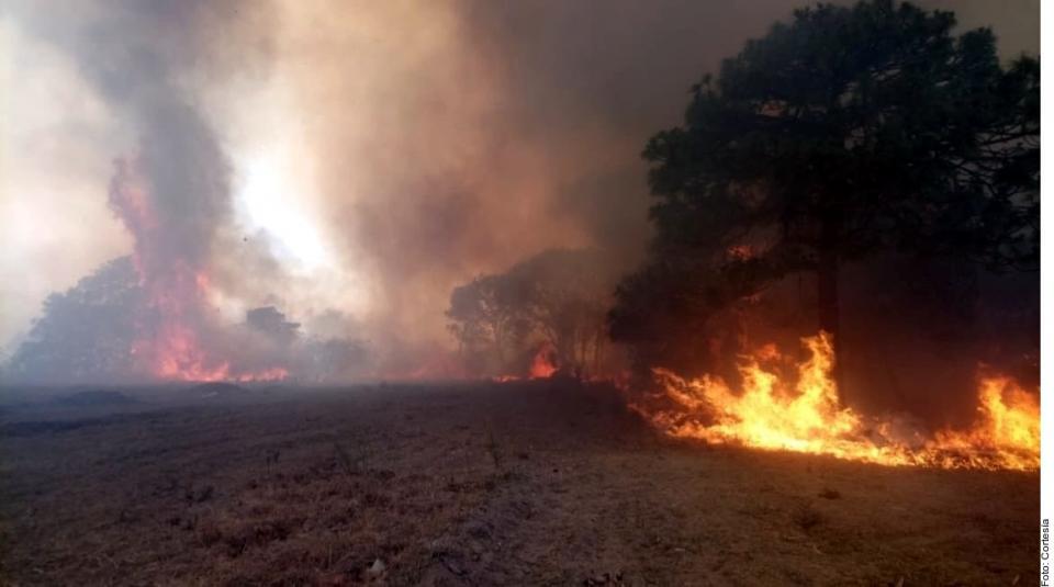 BOSQUE LA PRIMAVERA…Controlan incendio enLa Venta del Astillero