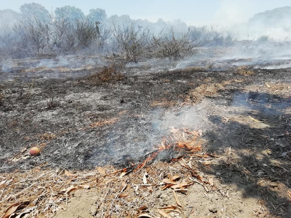 No cesan los incendiosforestales en la región