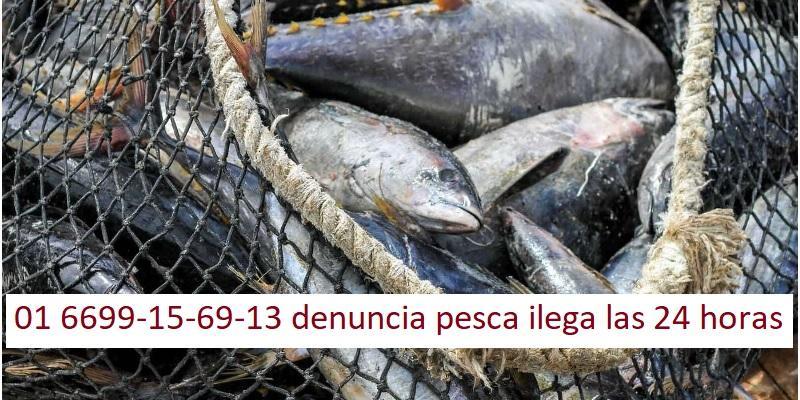 Abre Conapesca línea telefónicade denuncias por pesca furtiva