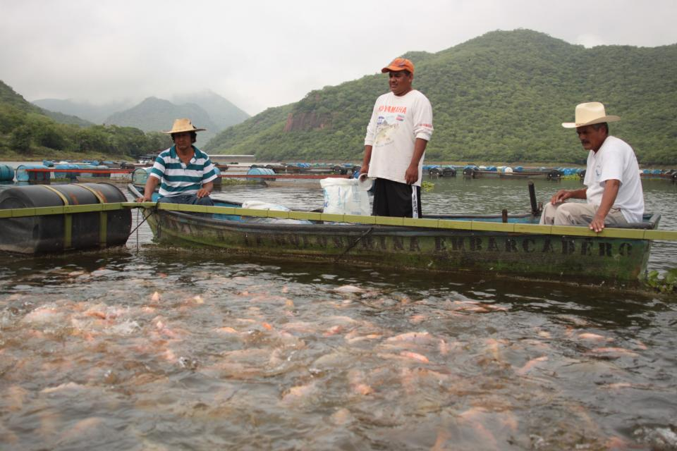 Buscarán la apertura de granjasacuicultoras en Bahía de Banderas