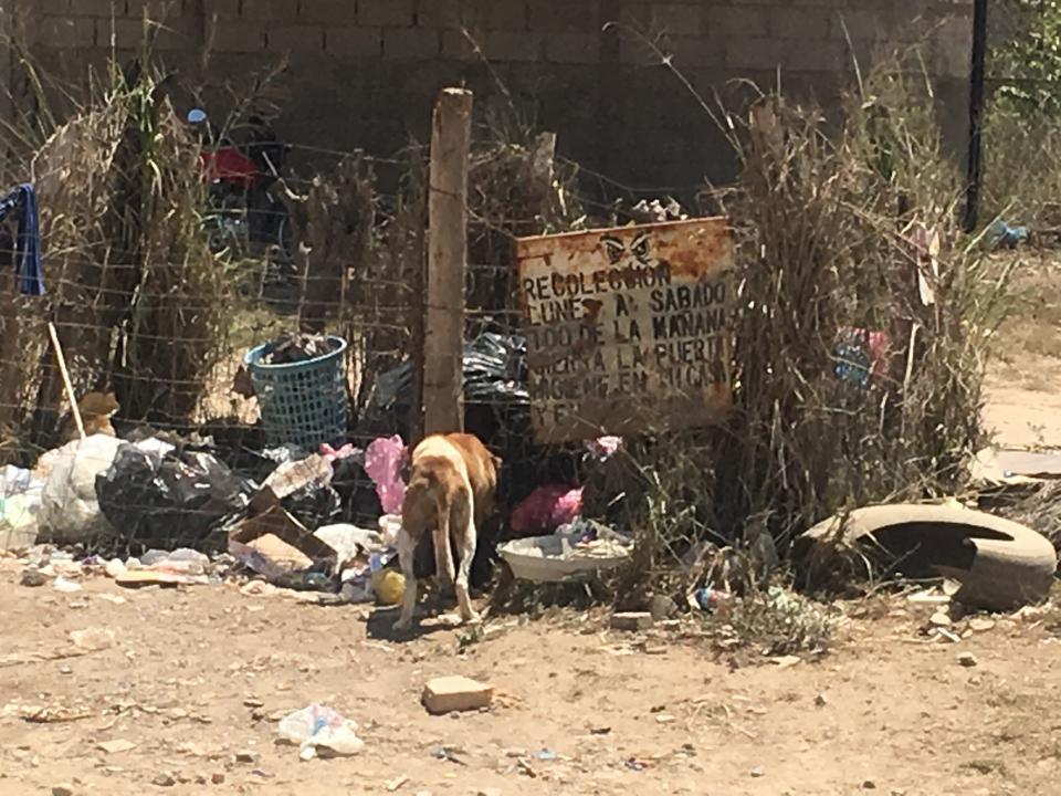 Una vida triste la de los perros de la calle