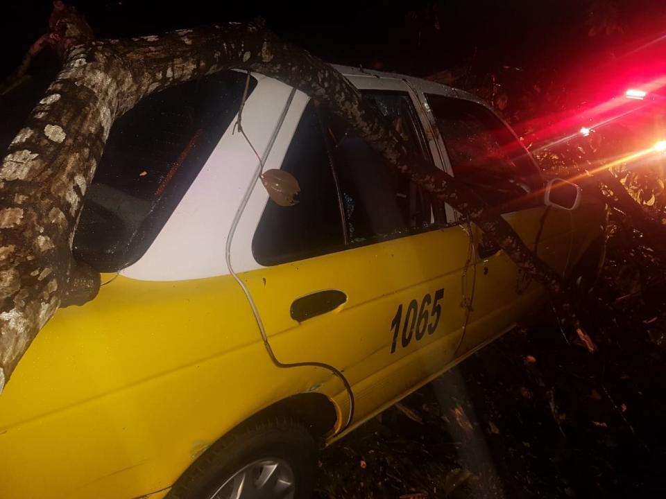 Tremendo susto: le cayóun árbol encima de taxi