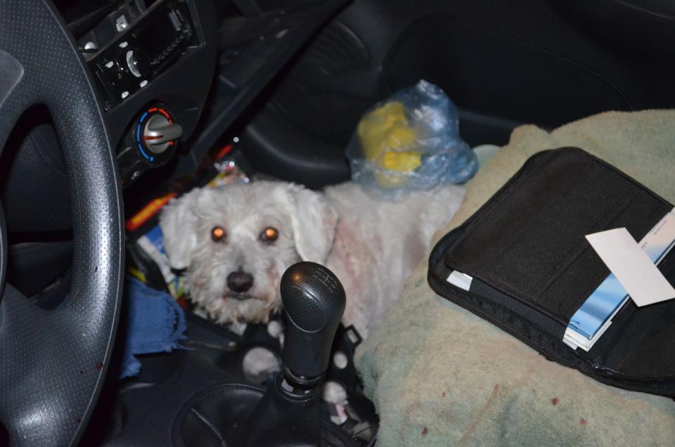 Choca su March contra lámpara;él y su perro salen heridos