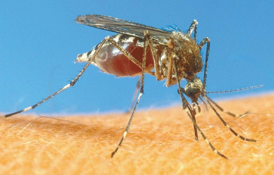 Ya hay casos de dengue, sikay chikunguya y aún no llueve