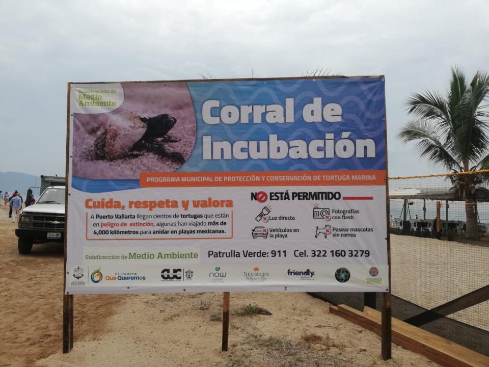 Arranque de temporada de tortugas; ya van más de 40 nidos en Vallarta