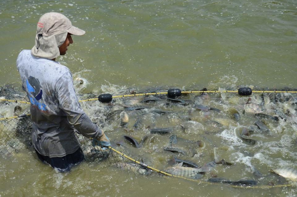 Inicia dispersión de recursos paraProductividad Pesquera y Acuícola