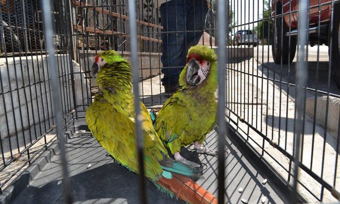 Comercialización de aves enla clandestinidad en Bahía