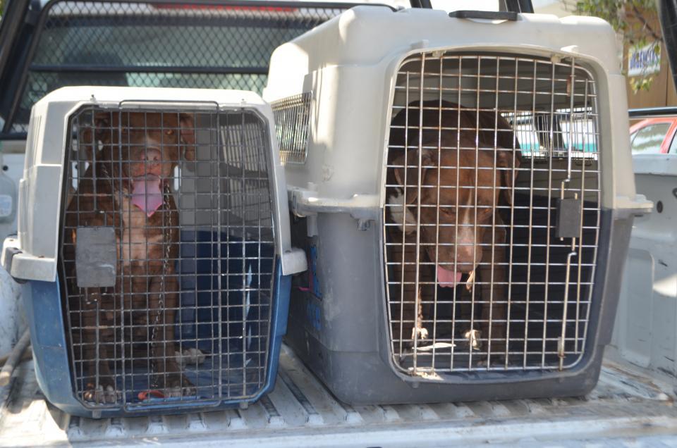 Se registran 45 casos de mordedurade perro y se detectan 547 agresivos