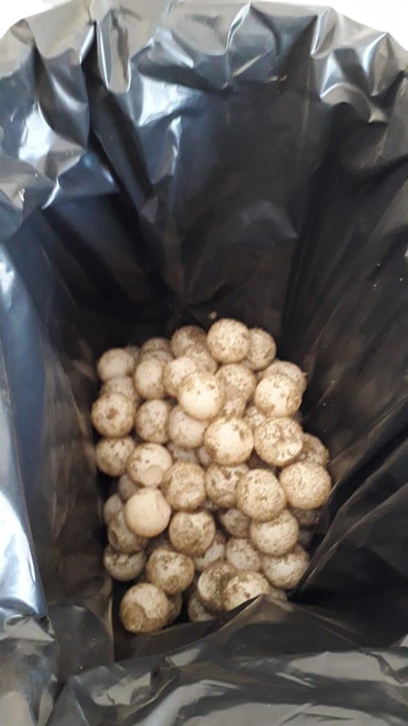 Investiga FGR aseguramientode huevos de tortuga