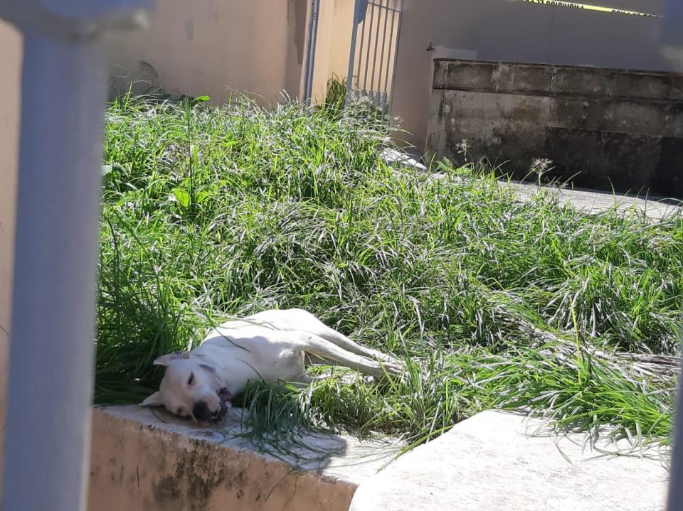 Envenenan perros en Marina Vallarta