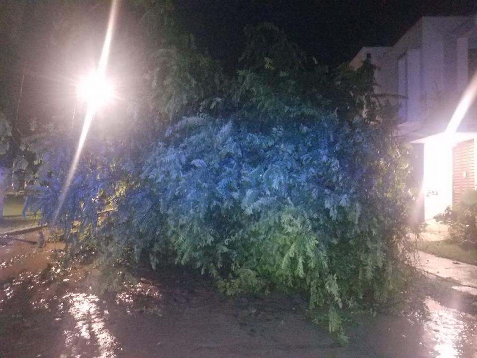 Tormenta eléctrica deja inundaciones,árboles caídos y palmas quemadas