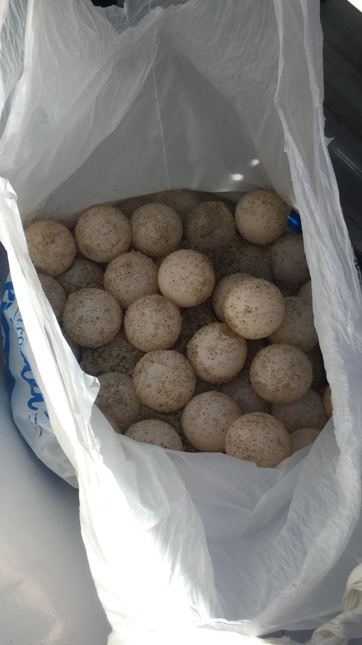 Portaba bolsa con huevos de tortuga, fue retenido por policía municipal