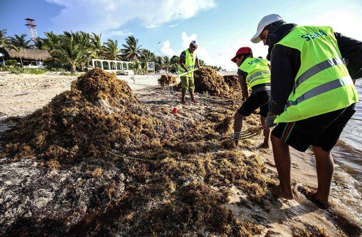 """Sargazo que invade playas del Caribe y Golfo de México es """"la nueva norma"""""""