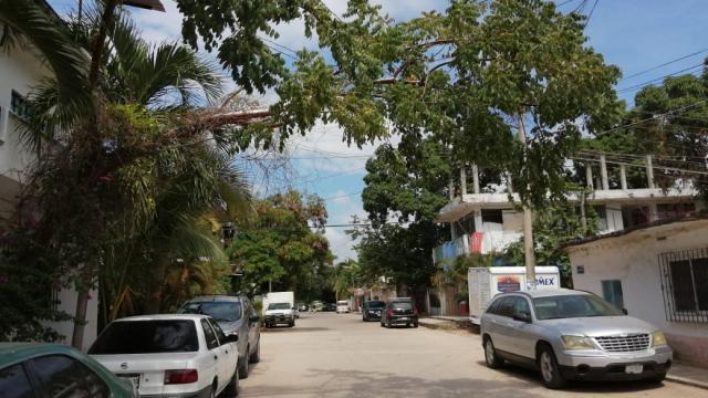 Por riesgo de caída  vecinos de El Mangal piden se poda de rama árbol