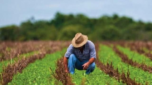 Impulsan agricultura sustentable con MasAgro