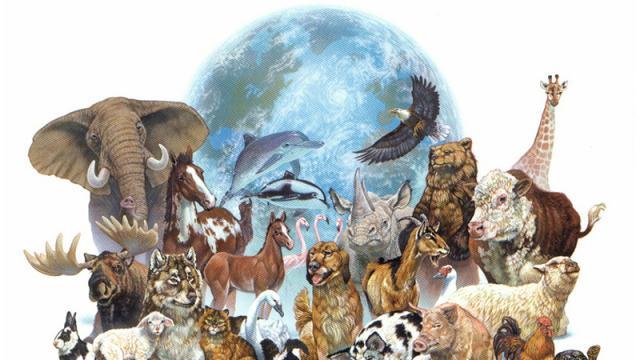 Exigen mayor esfuerzo para combatir el tráfico de vida silvestre