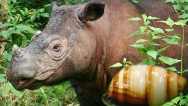 Declaran extintas a dos especies de animales