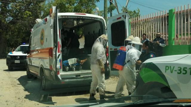 Ataque de abejas africanizadas en el Coapinole