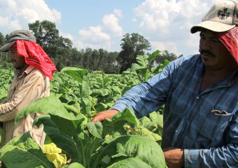 Mantienen apoyos al campo para garantizar alimentos en el país