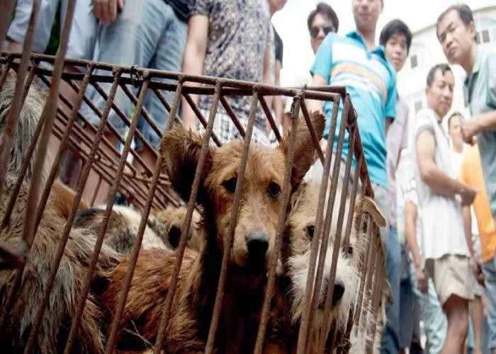 Prohíben consumo de perros y gatos en ciudad China
