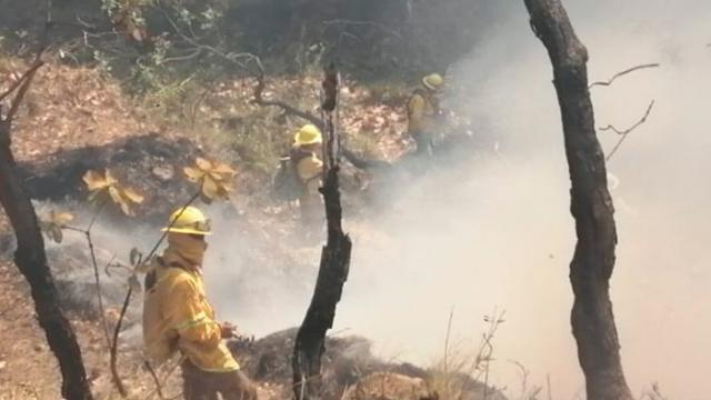 Reportan 48 incendios forestales activos