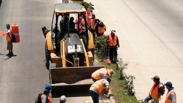 Dan empleo eventual a 100 personas en Bahía Banderas