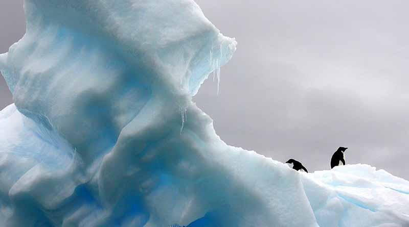 Sigue llegando contaminación plástica a la Antártida Estudios