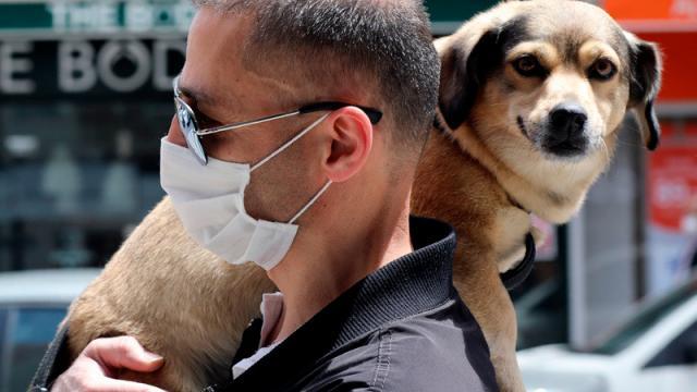 Conoce los síntomas que provoca el covid-19 en perros y gatos