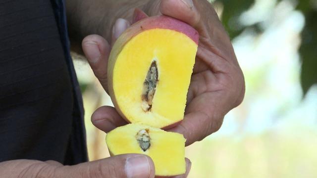Fruta con plaga