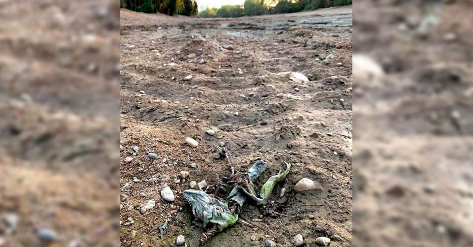 Ecocidio Río Pitillal