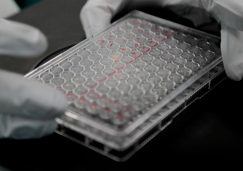 OMS descarta una vacuna contra el coronavirus en 2020